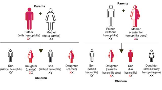 gen hemofilia