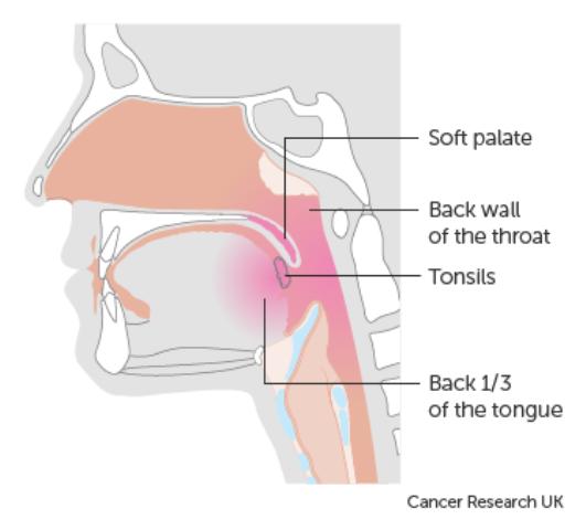 bagian-bagian lidah